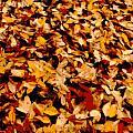 Fallen Leaves by Tg Devore