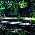 Fallen Log In A Lake by Bill Cannon