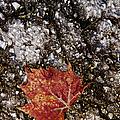 Fallen One by Margie Hurwich