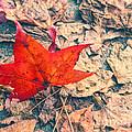 Fallen Red Leaf by Silvia Ganora