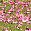 Fallen Rhododendron by Tikvah's Hope