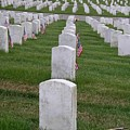 Fallen Soldier by Cynthia Marcopulos