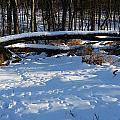 Fallen Tree Deertrails In Winter by Mark Victors