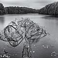 Fallen Tree by Eunice Gibb