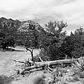 Fallen Tree by Two Bridges North