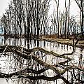 Fallen Tree Reflection by Grace Grogan
