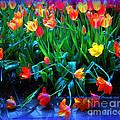 Fallen Tulips by Pamela Smale Williams