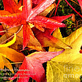 Falling Colors Fall Leaves by Constance Hessman