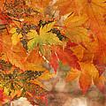 Falling Colors I by Leda Robertson