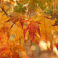 Falling Colors II by Leda Robertson