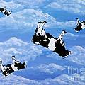 Falling Cows by Bela Manson