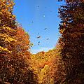 Falling Fall Leaves - Blue Ridge Parkway by Dan Carmichael