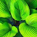 Falling Into Green by Ian  MacDonald