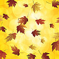 Falling Maple Leaves In Autumn Illustration by Jit Lim