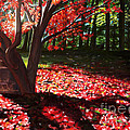 Falling Red Leaves by Diane Speirs