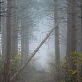 Falling Tree by Diane Carlson