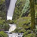Falling Water Cuts Into Mount Tamalpais by Scott Lenhart