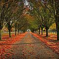 Fall's Driveway by Reid Callaway