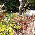 Falls Fall View by Gail Matthews