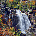 Falls In Fall by Lydia Holly