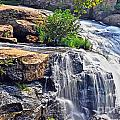 Falls Of Reedy River by Elvis Vaughn
