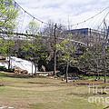 Falls Park On The Reedy Greenville by Steven Ralser
