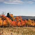 Fall's Splendor - Casper Mountain - Casper Wyoming by Diane Mintle