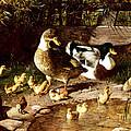 Family Of Ducks by Federico Jimenez y Fernandez