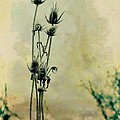 Family Of Teasels by Gothicrow Images