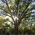 Family Tree by Jen T