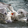 Famished Sea Gulls  by Debra  Miller