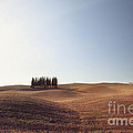 Famous Cypress Grove In Tuscany by Matteo Colombo