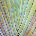 Fan Palm Abstract 2 by Duane McCullough