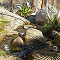 Fan Palm Leaves And Shadows Over Andreas Creek Rocks In Indian Canyons-ca by Ruth Hager