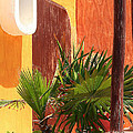 Fan Palm On Patio by Jack Thomas