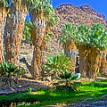 Fan Palms By The Creek In Lower Palm Canyon In Indian Canyons Near Palm Springs-california by Ruth Hager