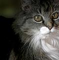 Fancy Cat by Belinda Greb