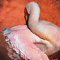 Fancy Dancer by Melinda Hughes-Berland