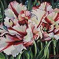 Fancy Parrot Tulips by Jane Girardot