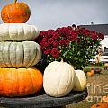 Fancy Pumpkins by Mary Koenig Godfrey