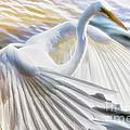 Fancy Wing Dancer  by Ola Allen