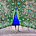 Fanning Peacock by Alice Gipson