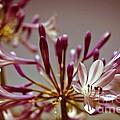 Fantastic Bloom by Sviatlana Kandybovich