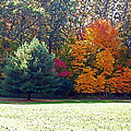 Fantastic Fall by Aimee L Maher ALM GALLERY