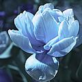Fantastic Flowers  by Lali Kacharava