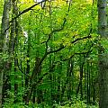 Fantastic Forest by Sylvia Herrington