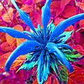 Fantasy Flower 1 by Duane McCullough