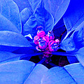Fantasy Flower 11 by Duane McCullough