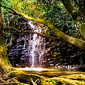 Fantasy Forest by Karen Wiles
