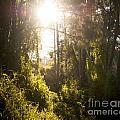 Fantasy Forest by Tim Hester